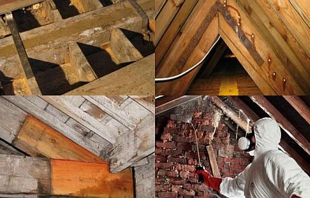 Brighton Damp Proofing - Woodworm Treatment